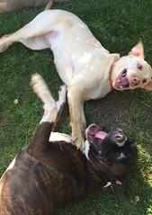 Stella & Jagger. Puppy 🐶 play date.