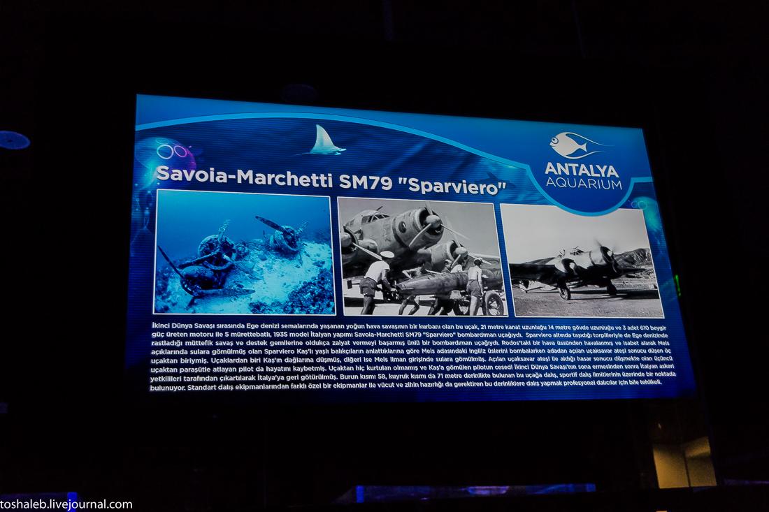 Анталья_аквариум-80