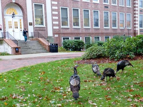 Dwight Hall with turkeys