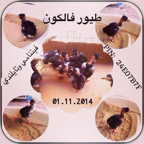 uaesheepuaesheep posted a photo: