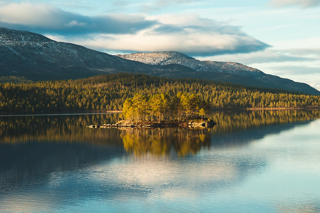 norway, land, forrest