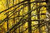 10112014_kelby-woods-1371
