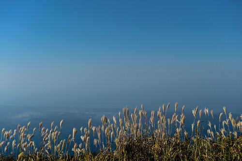 mountain flower 日本 山 三瓶山 sanbesan ススキ 草花 山岳 島根県 風景landscape 大田市 山頂からの眺望
