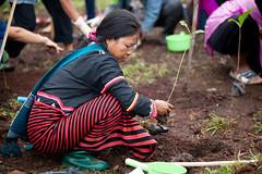Soneva Forest Restoration Project, Chiang Mai 02
