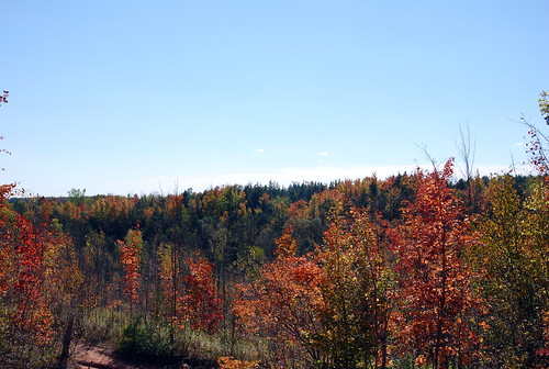 Fall trees in Caledon on the Niagara Escarpment, Ontario