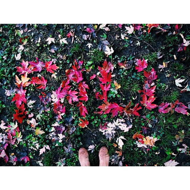 "Because Shiloh wasn't going to wait around long enough for me to spell ""autunno"" #fall #leaves #italy  #autunno"
