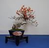 Shohin Tsuru Modoki - Oriental bittersweet-Mario Komsta- IMG_7219
