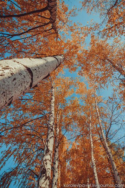 Autumn-034