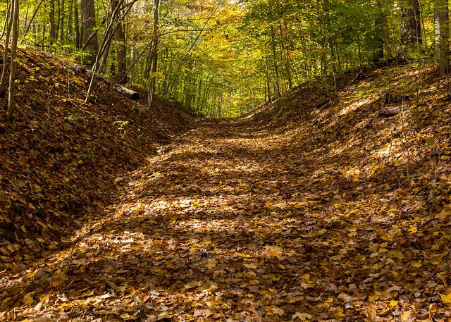 Leave Covered Hike