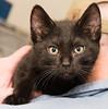 Cat Portrait: Geist