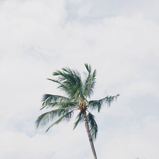 Minimal Palm Tree Hawaii