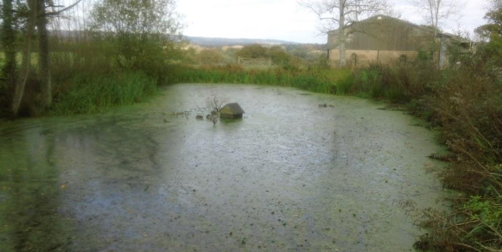 Pond Life... ...with inevitable duckhouse