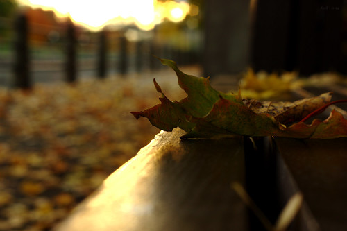 autumn canada macro fall sunrise bench canal vanishingpoint leaf maple bokeh ottawa capital rideau