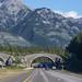 Road Trip to Edmonton!