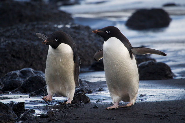 Penguin 3.0 Rolled Out! − Your Guide to Diagnose and Recover