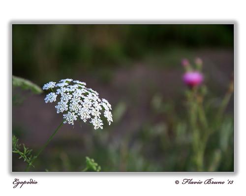 Autor: fbflickr