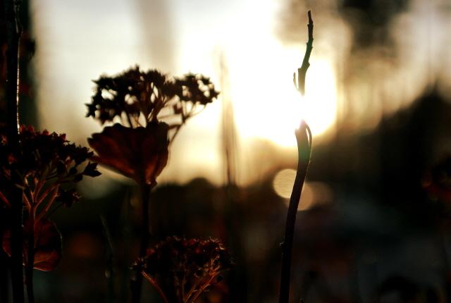 Autumn_9_2014_1