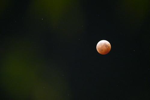 "FZ1000 ""Total Lunar Eclipse"""