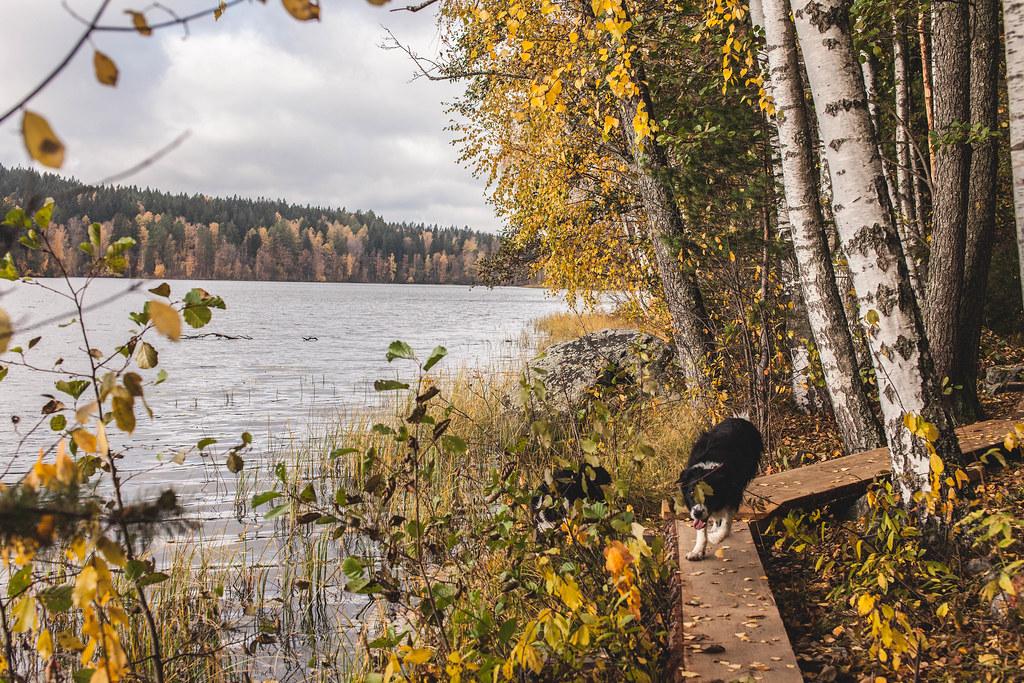 Aulangonjärvi