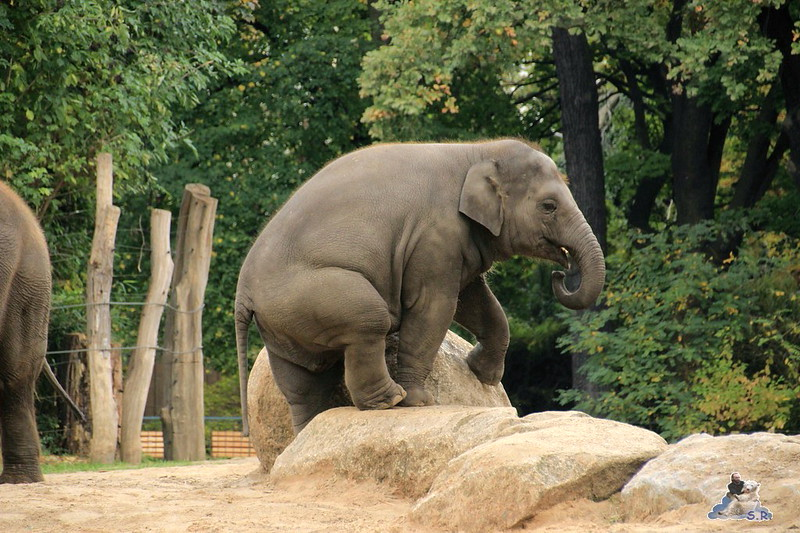 Berliner Zoo 6