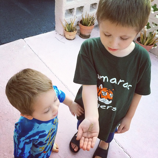 Catching #lizards with the littles!! #brothers #boymom #happy #kids #crazysouthfloridalizardspotting #lizard #southflorida #igers_ftl #igersflorida