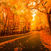 Autumn Roads by crmanski