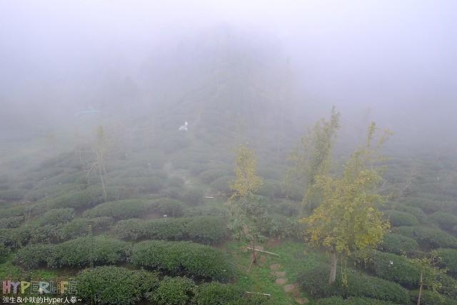 美麗茶園山景好療癒!南投鹿谷必玩景點:銀杏森林、大崙山銀杏林觀光茶園 @強生與小吠的Hyper人蔘~