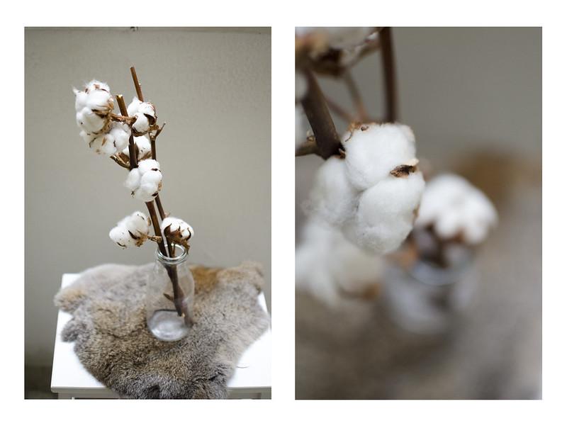 Flores de algodón
