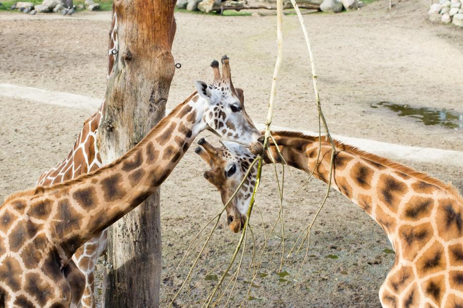 dierentuinamersfoort (3 of 8)