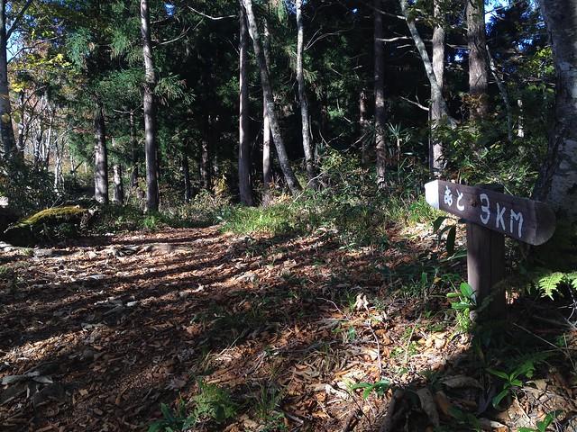 大日ヶ岳 ひるがの高原ルート 登山道 3km地点