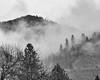 5550 Trees Mist Mountain