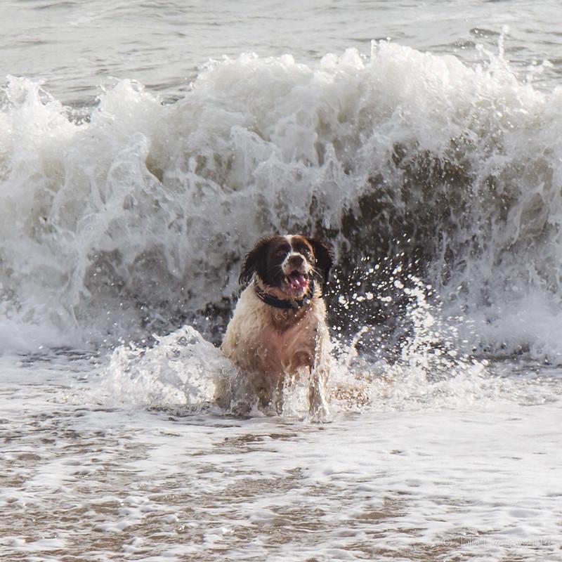Run Max!