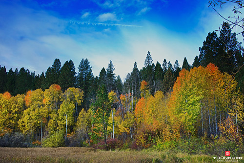 autumn nature leaves oregon centraloregon landscape outdoors northwest bend fallcolors sony scenic fullframe aspen fx deschutesriver bigeddy a7r sonya7r sonyilce7r zeissfe35mmf28za
