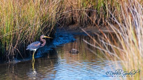 heron water birds landscape alabama dauphinisland escc nikond700 camerasouth debbiegodard