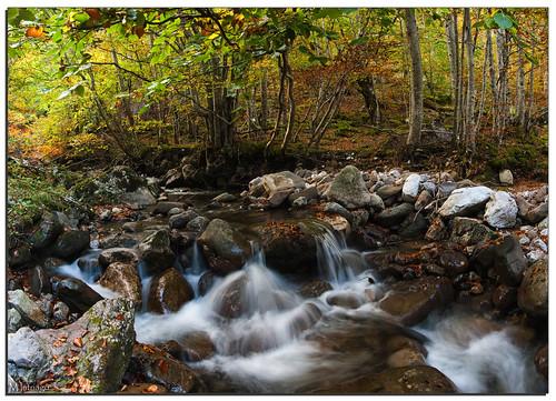 rio asturias bosque asturies lindes quirós parquenaturalubiñaslamesa riolindes ríodelafozgrande