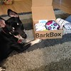 Olive's first BarkBox