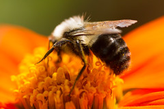 insects-10-25-2014-36.jpg