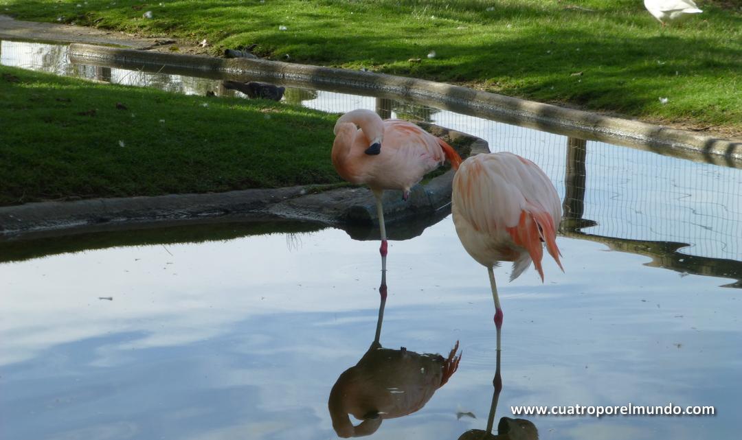Flamencos descansando en su estanque