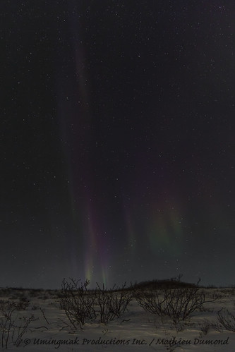 Aurora over the tundra-8076