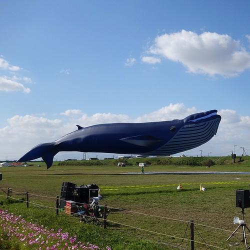 クジラの巨大カイト