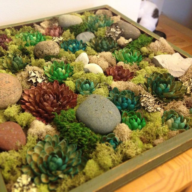 DIY faux #succulent garden. Pistachio shell succulents, misc rocks and bits of moss.
