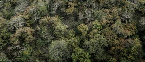 trees green wales woodland unitedkingdom branches sony textures gorge cardigan a77 cilgerran cilgerrancastle sonyalpha andyhough teifigorge slta77 sonyzeissdt1680 andyhoughphotography