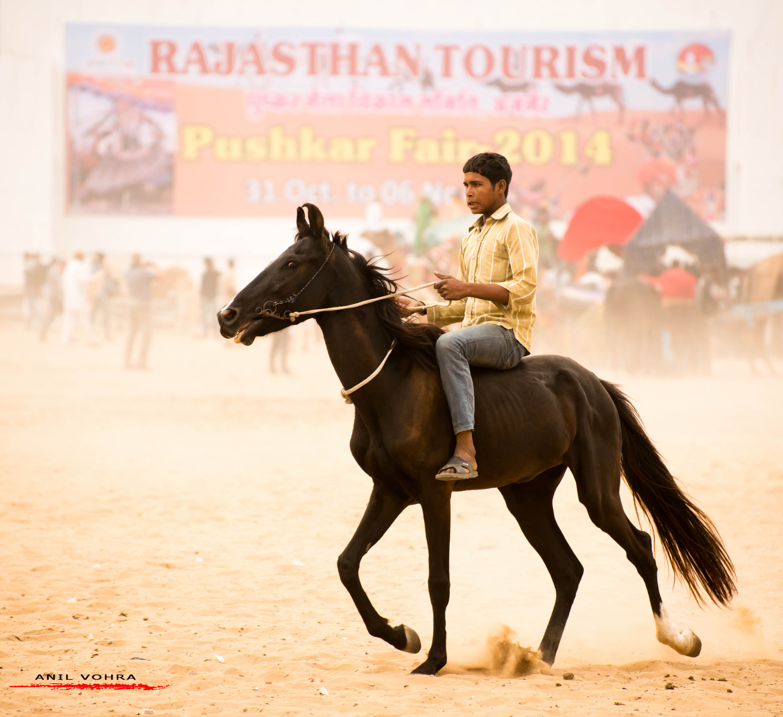 Welcome to Pushkar Fair
