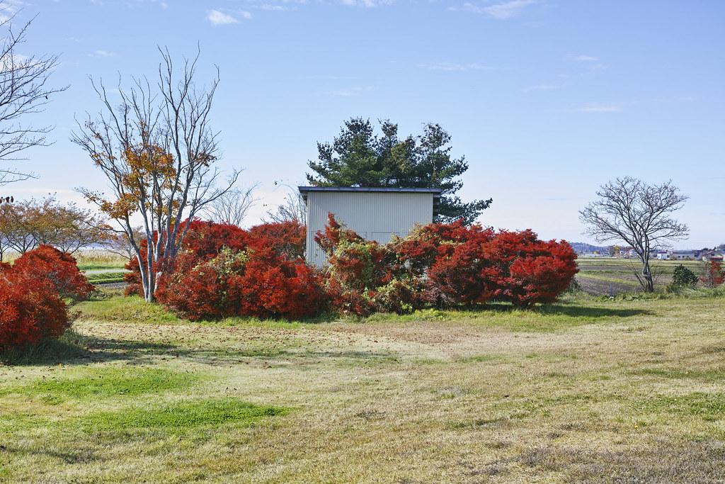 猪苗代湖の近くの秋