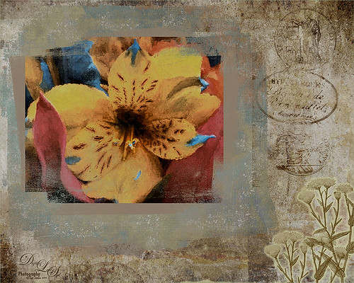 Image of a flower in a block frame