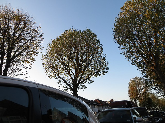 Trees and cars