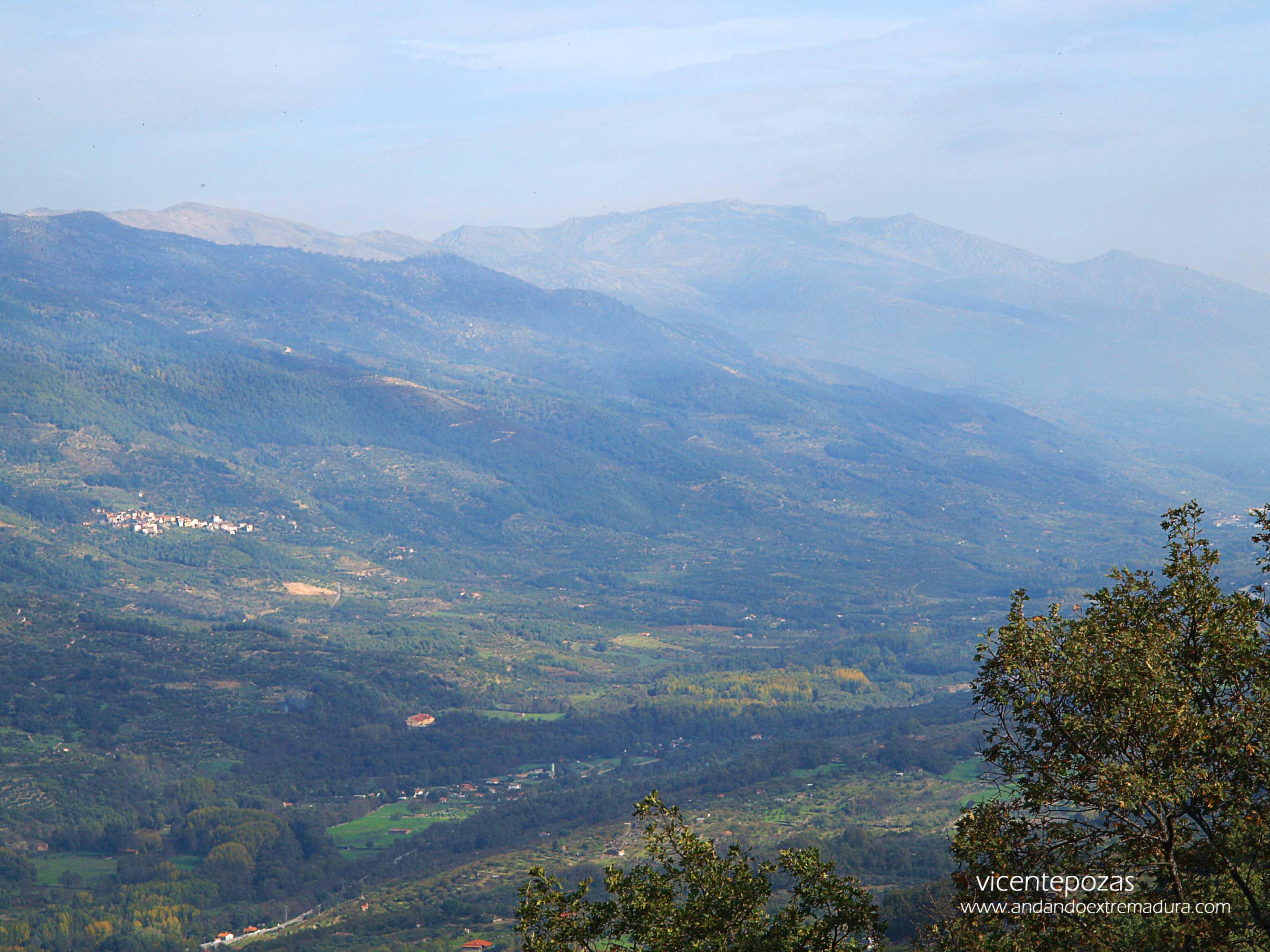 Castaños Centenarios en el Valle el Jerte