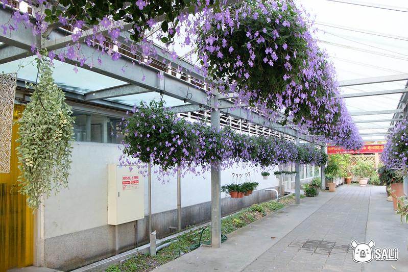 菁芳園落羽松-24