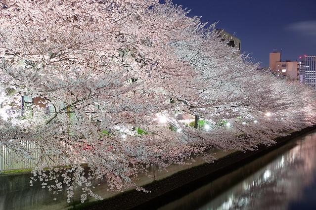 お江戸深川さくらまつり Oed Fukagawa Sakura Festival