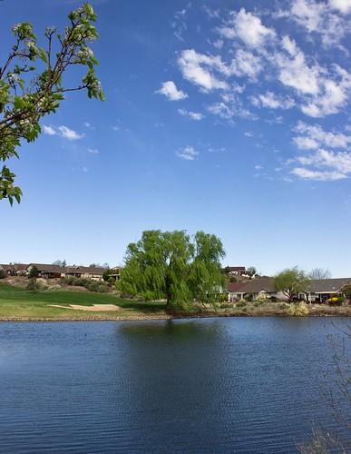 spring prescott arizona prescottlakes springweather tree trees treeseries